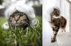 Hairpieces for Cats