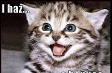 Cat Meme Tweet Translators