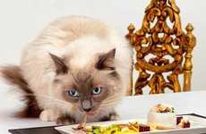 Nutritious Gourmet Cat Food