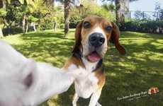 19 Pet Photographer Innovations