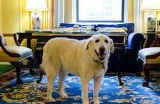 Luxury Hotel Canine Concierges