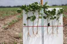 Biologically Enhanced Cotton Seeds