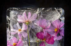 Ice-Encased Flower Photography