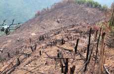 Proactive Afforestation Drones