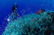 Coral Reef Cremations
