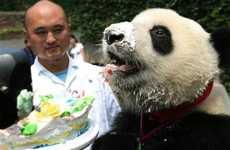 Cake-Eating Pandas