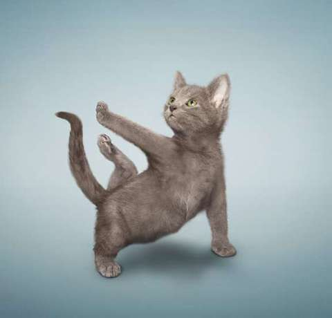 Funny Feline Fitness Moves