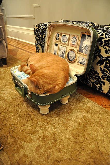Antique's for your Feline