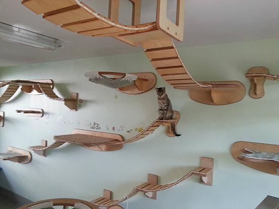 Complex Cat Walkways