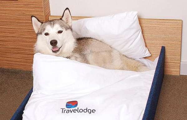 Hotel Pet Beds